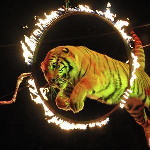 Цирки Усть-Лабинска