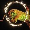 Цирки в Усть-Лабинске