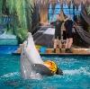 Дельфинарии, океанариумы в Усть-Лабинске